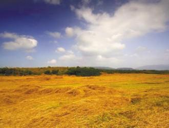 环保部发布四项<em>土壤检测</em>标准 8月1日起实施