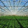 温室大棚农光互补  低碳环保绿色潮流