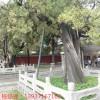 古树古建筑防雷方案 特种防雷工程施工 河南扬博防雷产品厂家