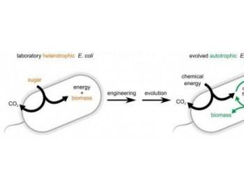 科学家使用定向进化方法使细菌将二氧化碳作为食物来源