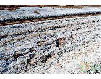 盐碱土壤治理获重要突破!<em>有机硅功能肥</em>创造产值效益逾19亿元