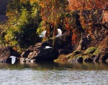 生态环境部:2019年长江<em>流域</em>水质优良比例为91.7%