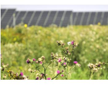 0.0355欧元/千瓦时 德国太阳能招标中标价最创新低