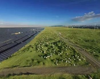 """2020年光伏电价政策再度征求意见 业内人士称其为""""定"""