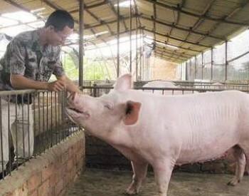 生态<em>环境</em>部:坚决反对打着环保旗号违法限制养猪业发展