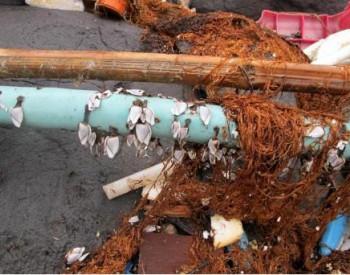 新型高级氧化技术处理<em>垃圾渗滤液</em>的研究进展