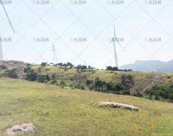广东河源风力发电场碎石边坡撒播种草绿化