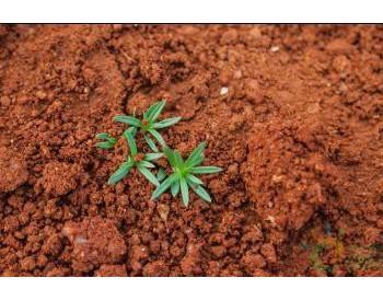 地球土壤每年可以吸收55亿吨二氧化碳
