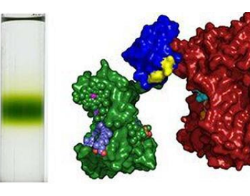 科学家结合了两种<em>光合作用</em>蛋白质,以制造更高转化率的太阳能电池