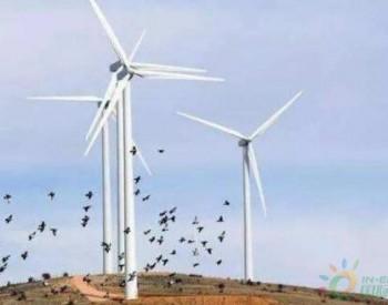 """每年杀死7千只鸟,风力发电机已成""""搅拌机"""",还有存在的必要吗"""