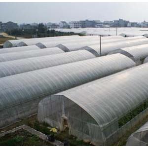 蔬菜大棚建造方式/蔬菜大棚承建/蔬菜大棚