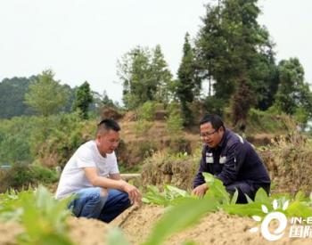 """贵州安龙县半坡村:""""电力扶贫"""" 助农""""摘帽脱贫"""