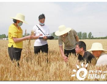 河南西平县酸化耕地恢复正常粮食产量连年提高