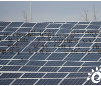 独家翻译|未来十年太阳能电池对白银的需求将达8.88亿盎司