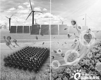 幸运的少数:用叶绿素造太阳能电池