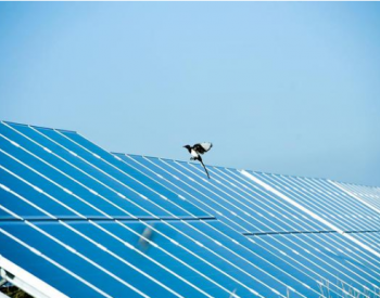 国际能源网-光伏每日报,众览光伏天下事!【2020年7月16日】