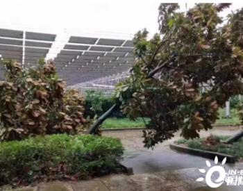 光伏电站可靠的证据 台风也吹不倒