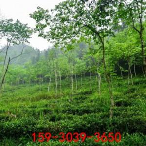 济南 矿山生态修复,矿山复绿工程,绿色矿山
