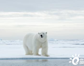 美国批准在阿拉斯加北极动物保护区进行石油钻探
