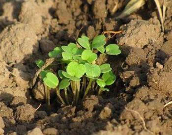 """让""""病土""""重现生命之光——广西探索土壤污染防治新举措侧记"""