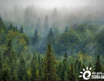 分析报告:木颗粒发电对环境的影响
