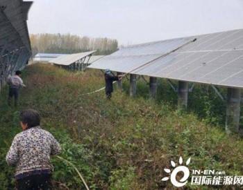 河南平舆县郭楼镇:加强光伏电站管护 让贫困户享