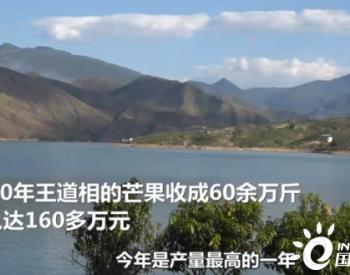 云南华坪的绿色转型:从产煤县变芒果乡