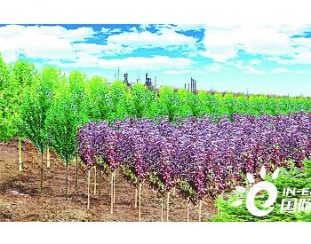 建设510亩园林,计划栽植乔木21260株 中国石油首个碳中和林项目启动