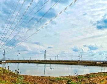"""江苏盐城:""""电力+生态"""",为湿地绿色发展赋能"""