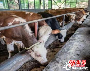 """湖南衡阳市积极推进""""五化""""秸秆综合利用 营造良好生态宜居环境"""