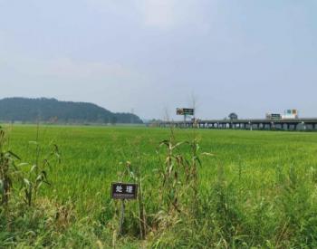 安徽贵池区<em>土壤污染治理</em>与修复:守护一方净土 试点示范在行动