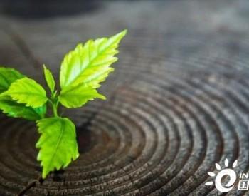 中投保:以绿色金融,助力碳中和