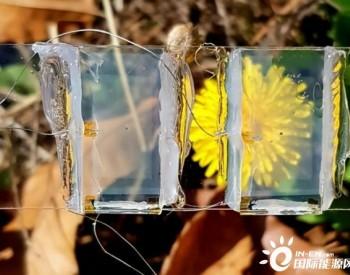 """韩国科学家研发透明光伏电池 未来或将""""融入""""窗户和手机屏幕"""