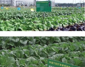 广东深圳中宜开发出资源化处理厨余垃圾新技术