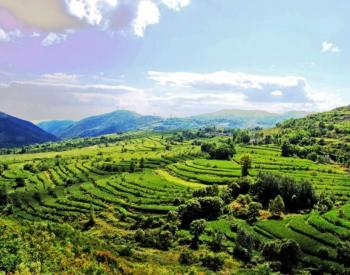 王一鸣 | 走一条有中国特色的绿色转型之路