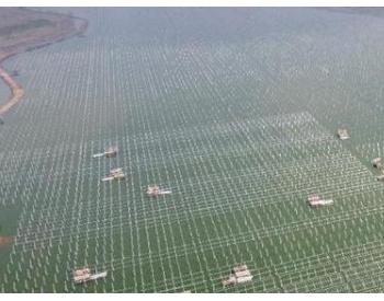 安徽:渔光互补光伏电站加速建设 助力乡村振兴