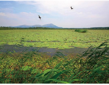 山东扎实推动<em>黄河流域生态保护</em>和高质量发展