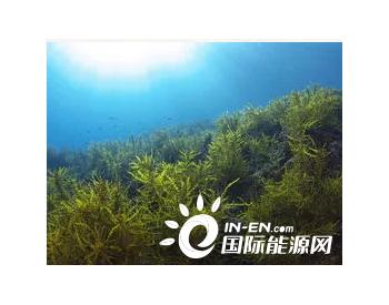 藻类<em>生物燃料</em>乙醇的制备(一)
