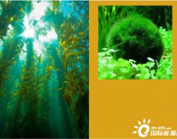 藻类<em>生物燃料</em>乙醇的制备(三)