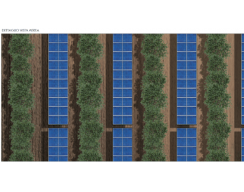 将大型太阳能项目融入到橄榄树丛中