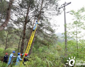 广西德保供电公司:<em>供电线路</em>清障专项行动显成效