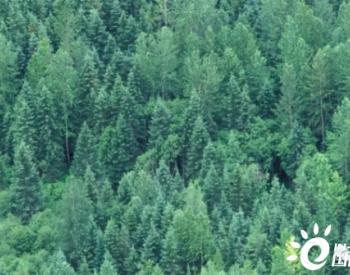 世界银行集团行长马尔帕斯关于《气候变化行动计划》的声明