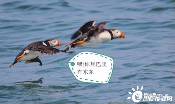 如何降低因风场鸟类撞击困扰,国内外开发商的十种解决办法!