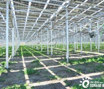 光伏+农业,安泰新能源支架系统助力引领农业发展