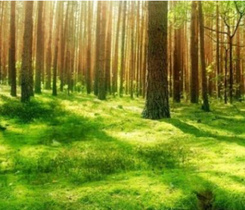 森林碳汇是石油公司绿色新选择?