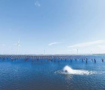 碳中和催生新机遇 光伏产业发展进程加速
