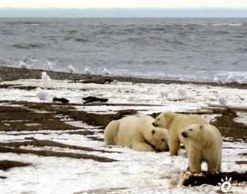 特朗普野心勃勃的北极圈油气租赁开发被拜登叫停  等待环保审查