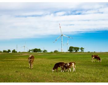 谁说风电不生态友好?有图有真相
