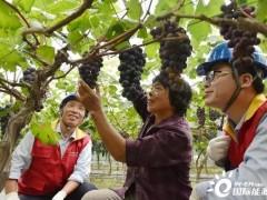 """植物工厂也能""""负碳""""!浙江平湖氢光储充一体化能源站启动"""