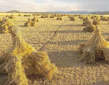 <em>农作物秸秆综合利用</em>又有新突破——利用农林废弃物生产生物质颗粒清洁燃料
